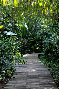 Boardwalk Path Between Tents and Dining Room