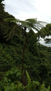 Fern Tree in the Forest