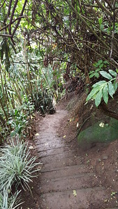A Trail in the Forest