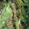 Cloud Forest Mosses & Ferns