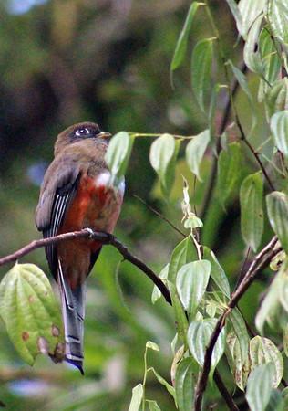 Tapanti  BIRDS  (14)