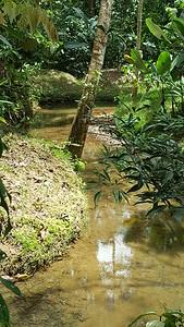 A Nice Little Stream Runs Through the Grounds