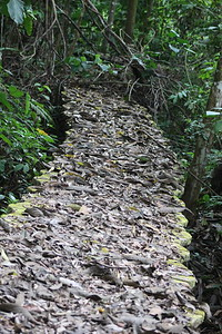 Closed Bridge Covered in Leaves
