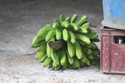 Fresh Bananas Every Day!