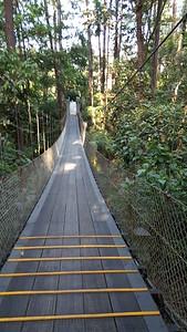 One of Many Hanging Bridges on Lodge Grounds