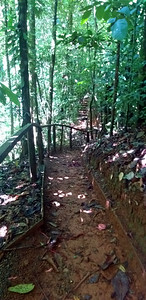 Trail to Waterfall
