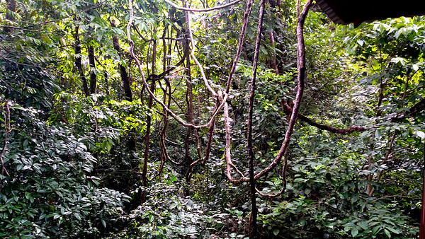 """My Tree House Named """"Tarzan"""" VIEW"""