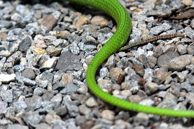 Unidentified Green Snake