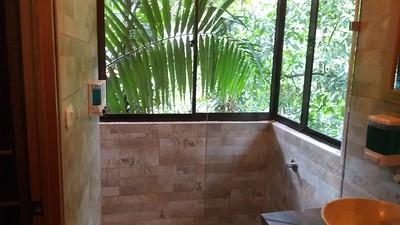 My Tree -Tops Shower!