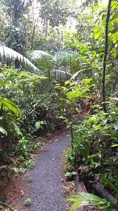 Long Hike to Tree House