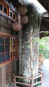 """My Tree House Named """"Tarzan"""""""