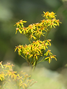 Flowers at