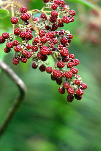 Berries?