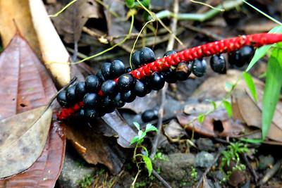 Berries or Seeds?