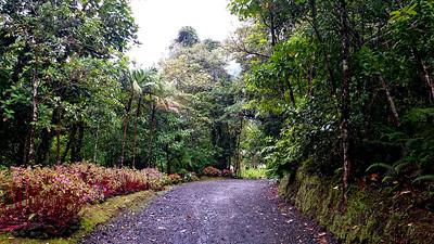 Lodge Road