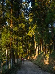 Glenburn Tea Plantation and Estate Darjeeling