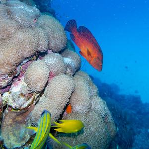 Nursery Dive Site