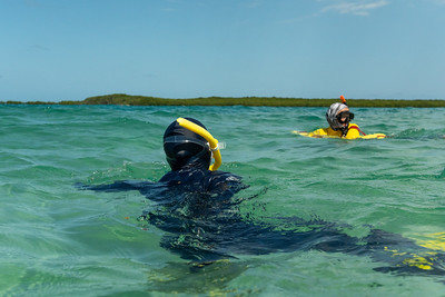 Snorkeling around Low Isles