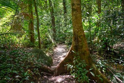 Mossman Gorge hike