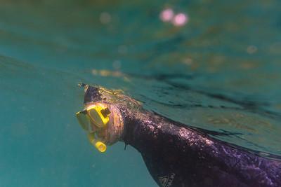 Snorkeling around Low Isles