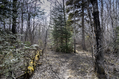 Gorge Creek Trail, Manitoba Escarpment
