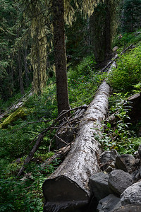 Hike to Joffre Lakes