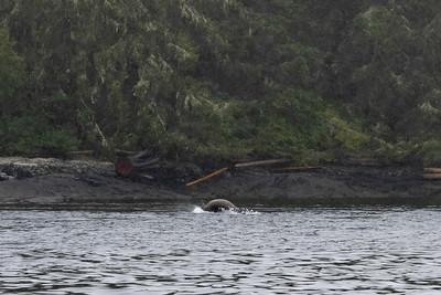 Whalewatching Adventure