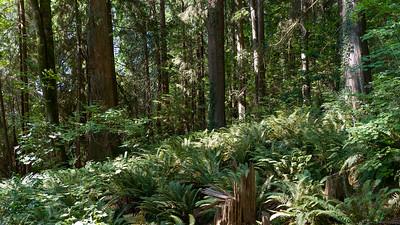 Baden-Powell Trail