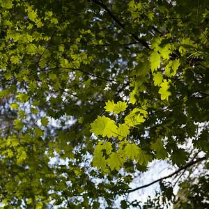 Stanley Park - Vancouvefr