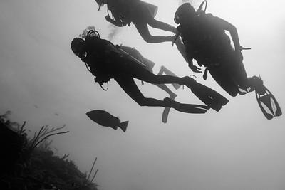 Tarpon Caye Dive Site