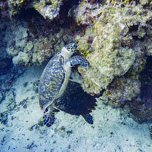 WEST END - ROATAN ISLAND SCUBA DIVING