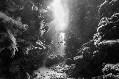 Mary's Place Dive - Roatan Honduras