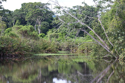 Río Suarez Creek