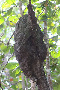 Ant or Termite Nest