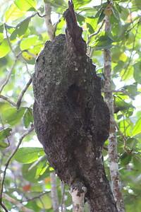 Ant or Termite Nest