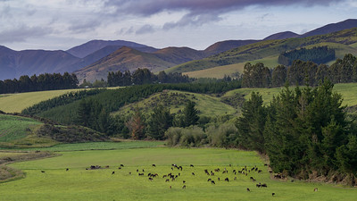 Longridge North, New Zealand