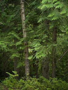 Mt Revelstoke National Park