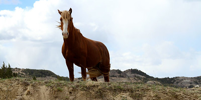 We came upon this wild horse after we turned a corner. He was grazing right along the side of the road.