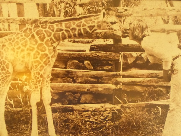 Old Giraffe Manor Images