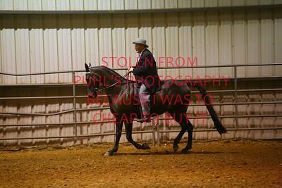 thur 11 - SADDLE HORSE PLEASURE - ADULTS