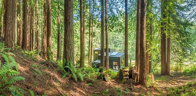 Backyard View from the Redwoods