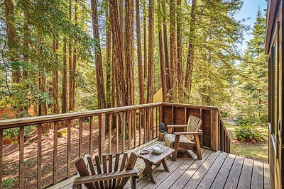 View of Towering Redwood from Deck