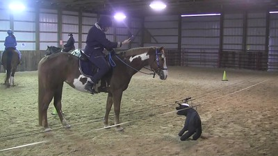 TSRC 2017-11-18 Ride On Ranch Cow Clinic