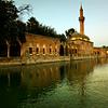 Salinurfa (Urfa) or Edessa in the past.  •The legendary Pool of Sacred Fish (Balıklıgöl) where Abraham was thrown into the fire by Nimrod.