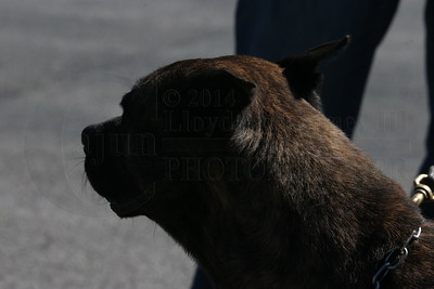 Tennessee Valley Working Dog Association