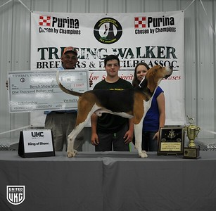 2017 TWB&FA Youth Extravaganza Overall Dog of Show