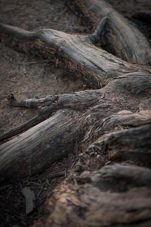 del-mar-photographics-tween-photographer-1194