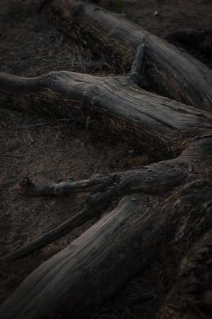 del-mar-photographics-tween-photographer-1193