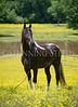 StunningSteedsPhoto-HR-8202