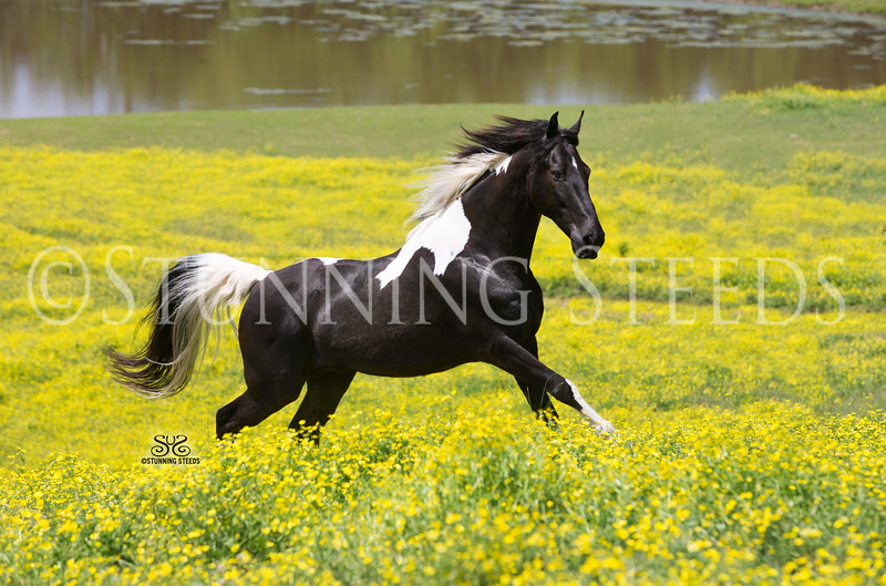StunningSteedsPhoto-HR-8373-tu